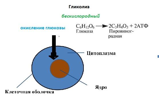 бескислородный этап