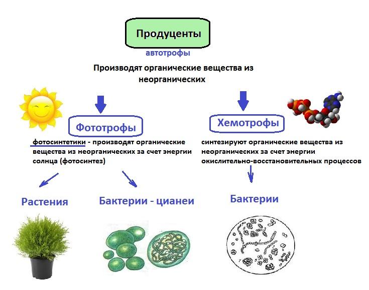 травы от паразитов в крови