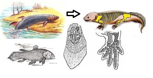 Доклад по биологии кистеперые рыбы 9201